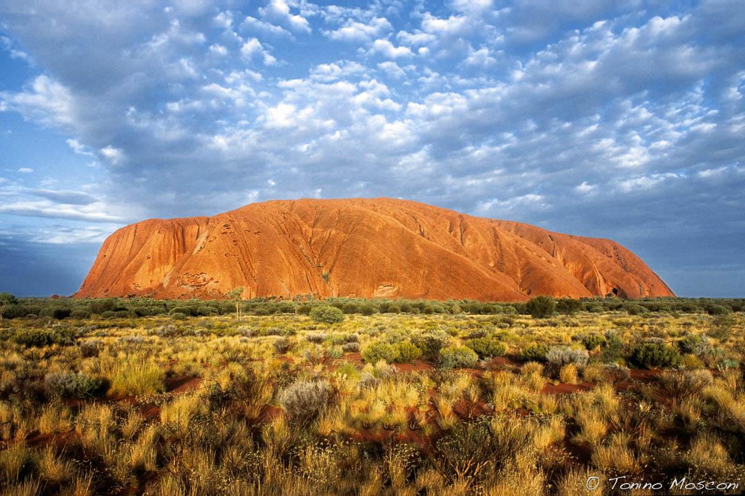 Australia tmosconi 792101