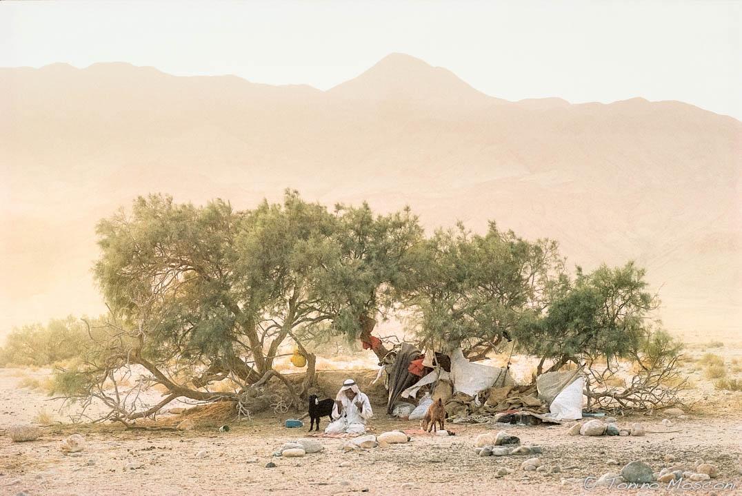 Sinai tmosconi 1461