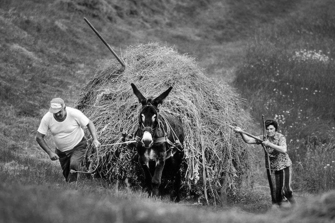 Contadini con Mulo, Romagna Italy by Tonino Mosconi Fotografo, fineart photography, editoria, pubblicazioni, servizi fotografici turismo